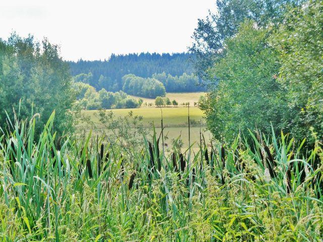 Podlesí - orobinec na okraji pastviny pod obcí u cesty na Malou Moravu