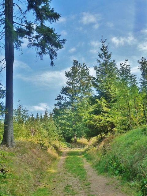 Suchý vrch - cesta po zelené TZ z Červenovodského sedla na Prostřední vrch