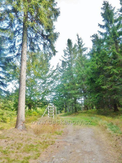 Suchý vrch - cesta po zelené TZ několik metrů před vrcholem Prostředního vrchu