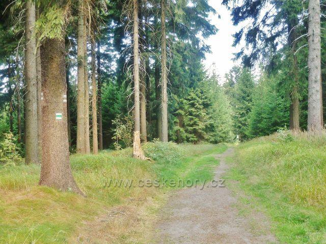 Suchý vrch -cesta po zelené TZ z vrcholu Prostředního vrchu do sedla Hvězda