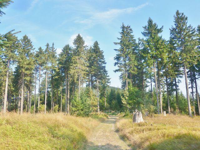 Suchý vrch - cesta po zelené TZ z vrcholu Prostředního vrchu do sedla Hvězda