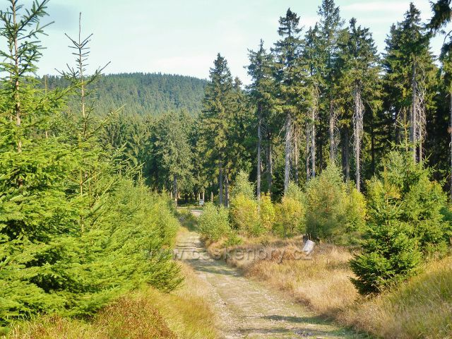 Suchý vrch -poslední část sestupové cesty po zelené TZ z vrcholu Prostředního vrchu do sedla Hvězda