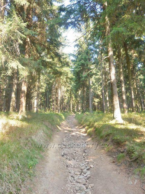 Suchý vrch - Jiráskova cesta ze sedla Hvězda na vrchol Suchého vrchu
