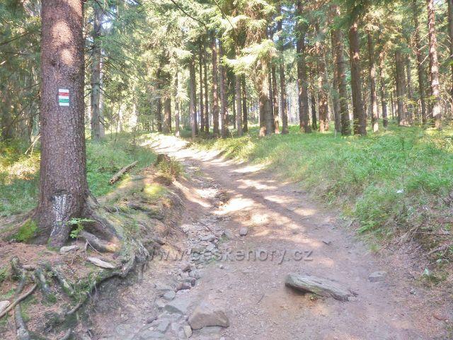 Suchý vrch - Jiráskova cesta na vrchol Suchého vrchu ze sedla Hvězda
