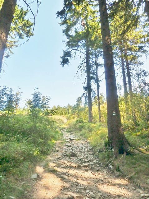 Suchý vrch - Jiráskova cesta z Hvězdy pod vrcholem Suchého vrchu
