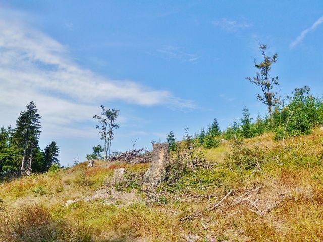 Suchý vrch - Na Jiráskově stezce pod vrcholem Suchého vrchu