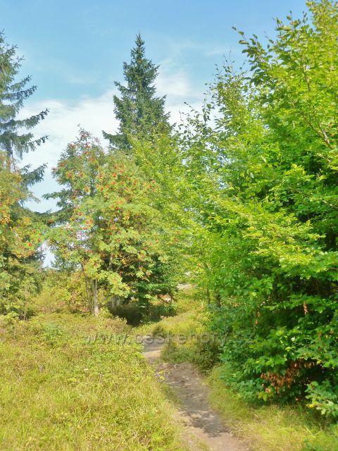 Suchý vrch - cesta z vrcholu po červené TZ ke Kramářovo chatě