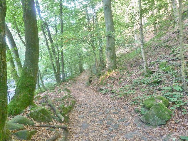 Brná - cesta Dr.Guta- Jarkovského podél toku Divoké Orlice