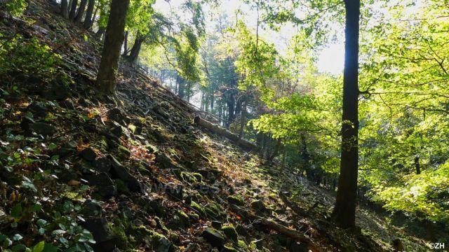 Stoupání na Šenovský vrch