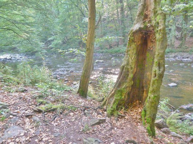 Brná - Divoká Orlice pod skalními výhozy