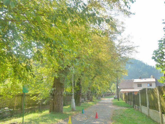 Potštejn - čtyři stromy moruše pod zámeckým parkem pochází z doby,kdy hrabě Harbuval Chamaré chtěl zde zavést výrobu hedvábí
