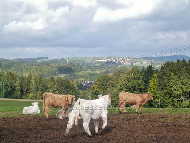 Bystřec - pastva na úbočí Cikánského kopce.V pozadí jsou Sbkovice