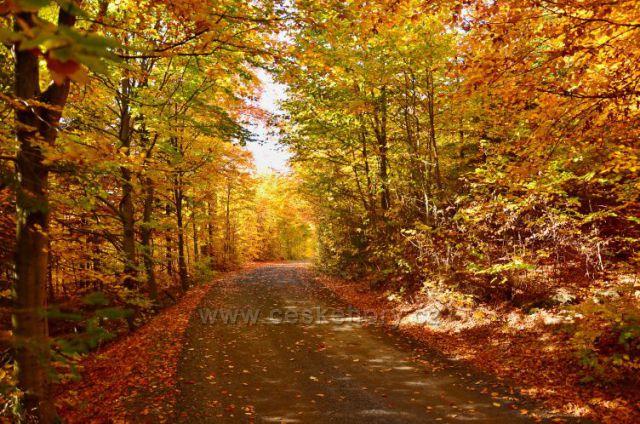 Hřebenovka-barvy podzimu