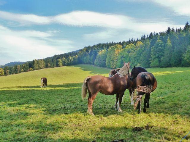 Ostružná - pastva koní na pastvině Nad splavem