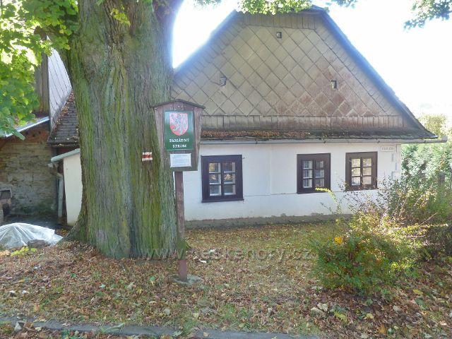 Žamberk - památná lípa u kapličky svaté Anny