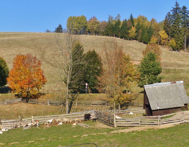Petrovičky - kozí farma pod hraničním přechodem do Polska