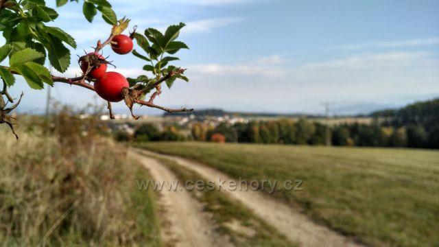 Šipky s podzimní krajinou