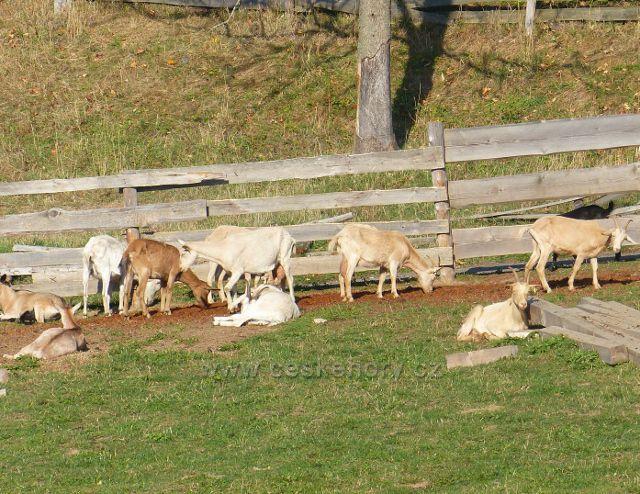 Petrovičky - kozí farma pod hraničním přechodem