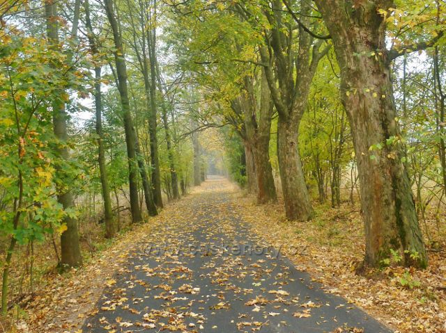 Lichkov - podzim v aleji podél Mladkovské bunkrovky