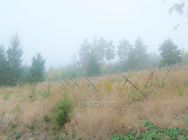 Lichkov - oplocenka na úbočí vrchu Vysoký kámen