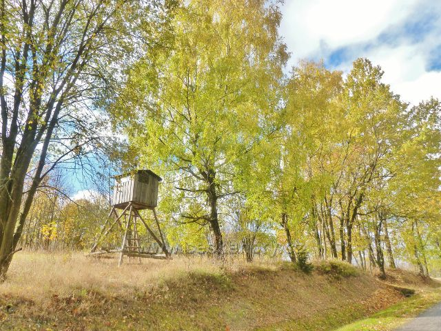 Horní Orlice - posed na úpatí Jeřábu nad silničkou do Zlatého Potoka