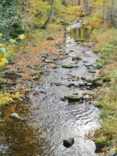 Malá Morava - malý stav vody na horním toku Moravy (pohled proti proudu)