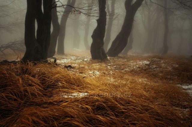 Bukové lesy v Krušných horách