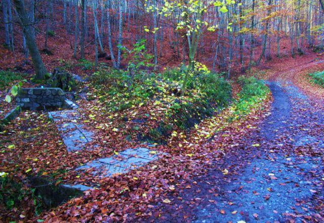 cesta k hradu Cimburk a skále Kozel