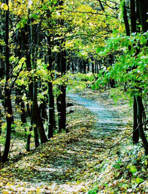 Cesta k hradu Cimburk
