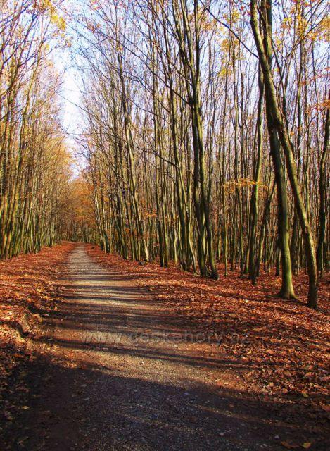 cesta Buchlovskámi horami vedoucí k Cimburku