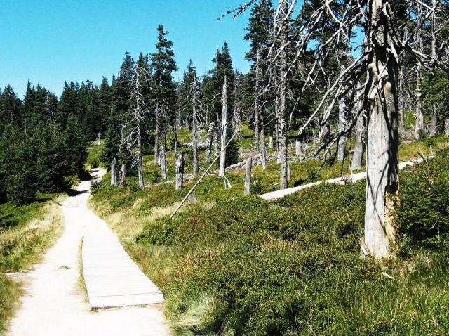 cestou na Kralický Sněžník - pralesovitý porost
