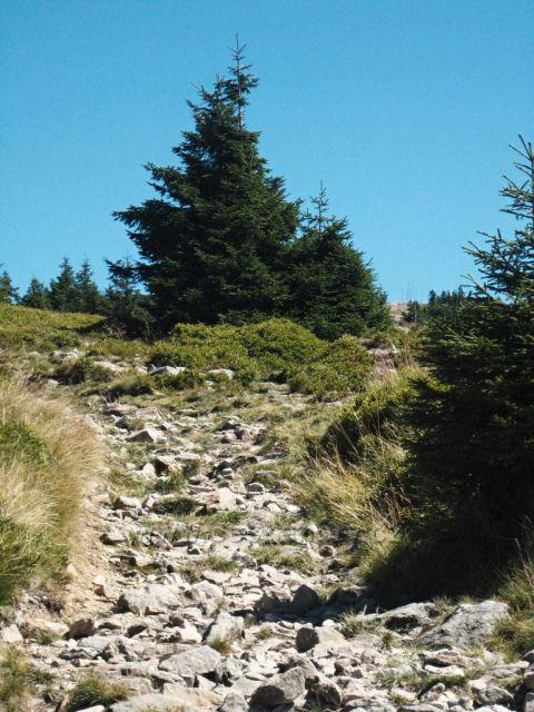 cesta k vrcholu Kralického Sněžníku - pod vrcholem