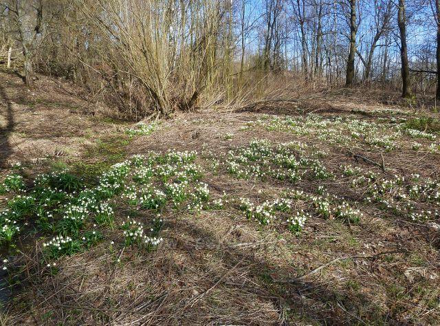 Jaro ve Vlčkovicích