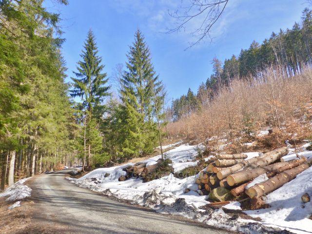 Sklené - lesní silnička vede až pod Babuši