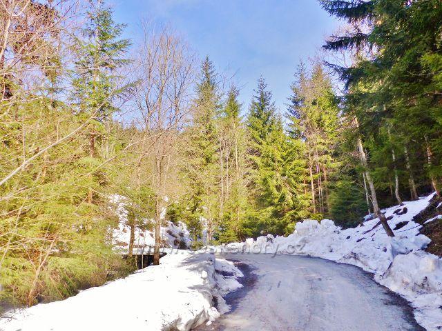 Sklené - za zatáčkou se lesní silnička odvrací od toku Mal= Moravy