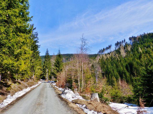 Sklené - lesní silnička pokračuje mírným stoupáním až pod Babuši