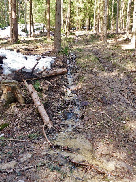Sklené - jeden z mnoha lesních potůčků na svahu Chlumu odevzdává své vody Malé Moravě