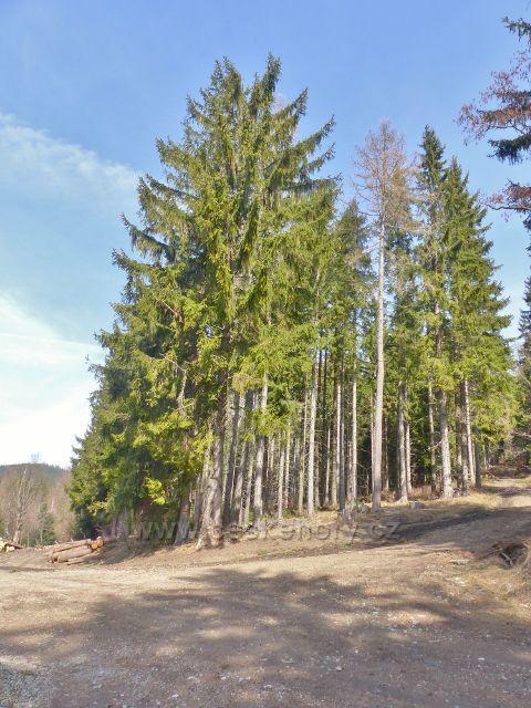 Dolní Morava - rozcestí v lokalitě Louky mezi Chlumem a Maliníkem
