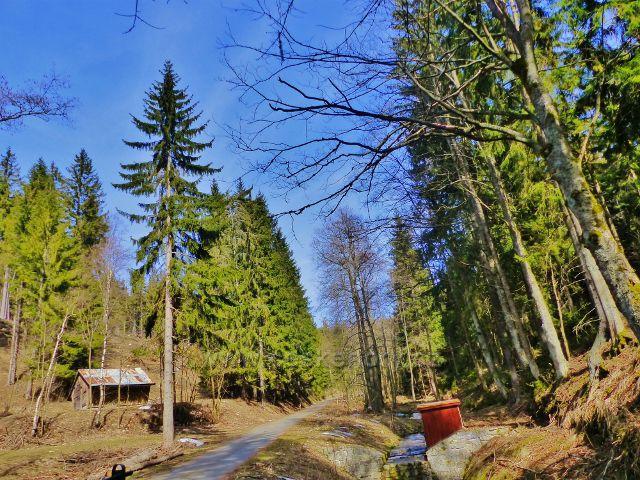Dolní Morava - lesní silnička na Dolní Moravu vede údolím podél Mlýnského potoka