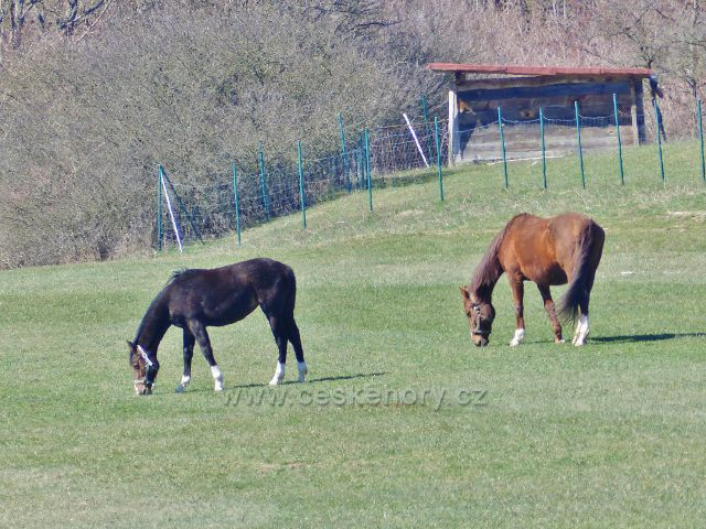 Kunvald - pastva koní v údolí Rokytenky
