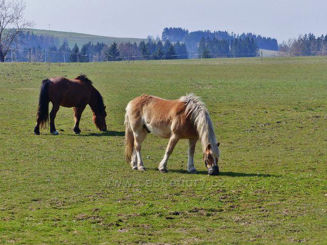 Rokytnice v Orlických horách - pastva koní u Dolního dvoru