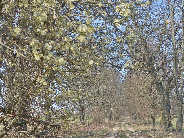 Rokytnice v Orlických horách - cesta po žluté TZ  z Dolního dvora do údolí Rokytenky