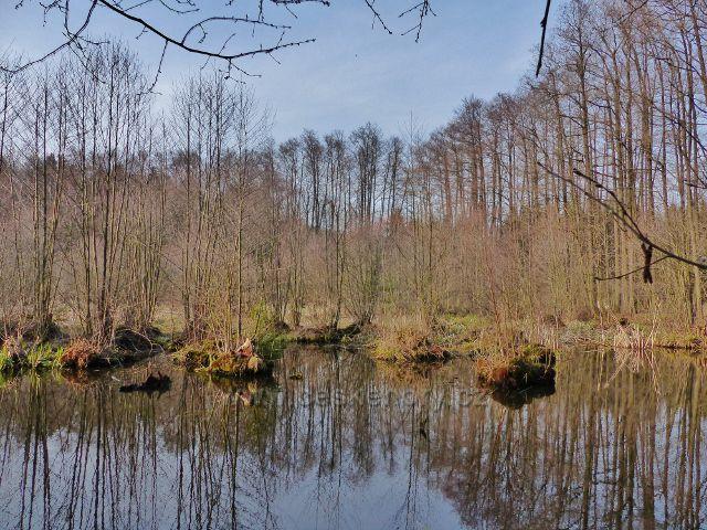 Žamberk - rybník Dymlov