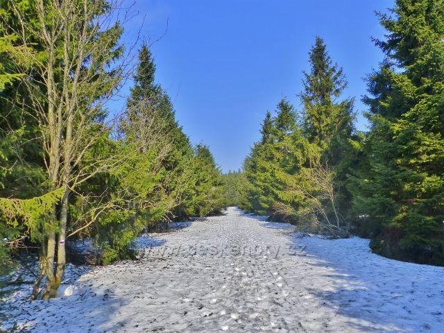 Zasněžená Jiráskova cesta z Šerlichu na Vrchmezí