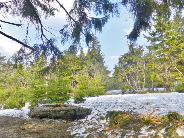 Šerlich - zasněžená Jiráskova cesta  na Vrchmezí