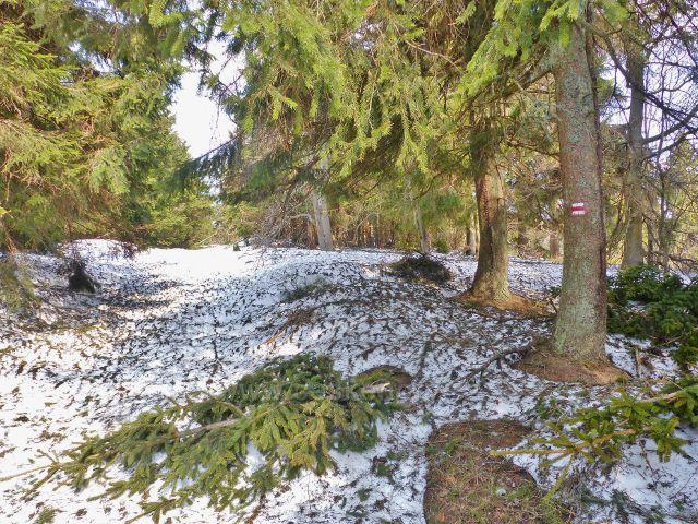 Zasněžená Jiráskova cesta po červené TZ na Vrchmezí