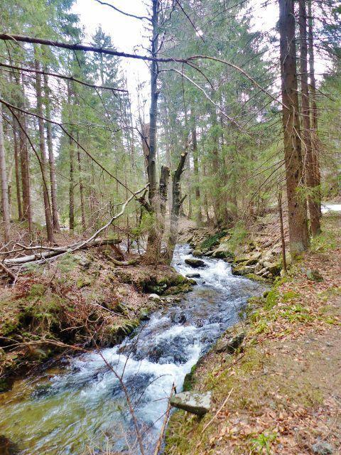 Místy má horní tok Moravy prudký spád