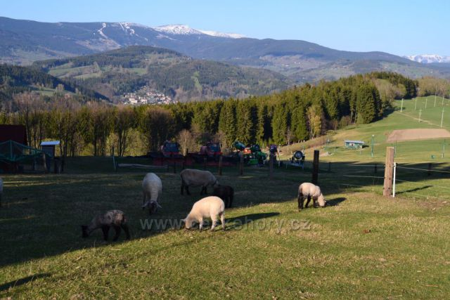 Výhled na hřebeny Krkonoš z Vysokého nad Jizerou