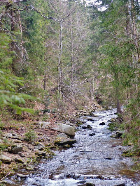 Horní tok Moravy