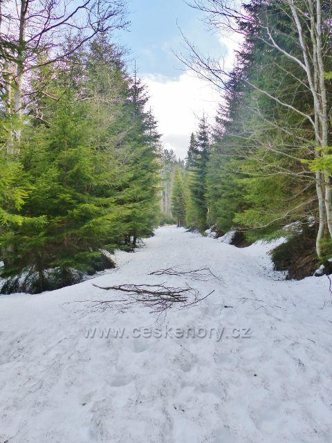 Zbytky sněhu na cestě po žluté TZ podél Moravy dostávají souvislejší charakter